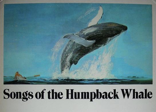 داستان البوم «آواز نهنگهای گوژپشت» که اغازگر جنبش ممنوعیت صید تجاری نهنگها شد
