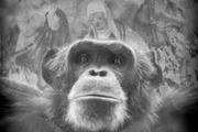 روایت انی بری از رنج میمونهای نادر ودر معرض انقراض در باغ وحشهای اروپا