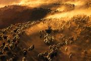 ۲۰۱۹؛ سال منظرههای روستایی اعلام شد